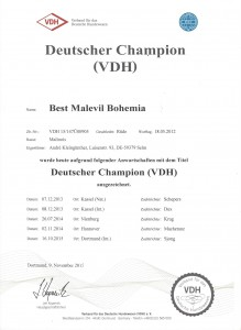 Best DtChamp
